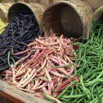 Beans Leguminous Plants Legumes  - annquasarano / Pixabay